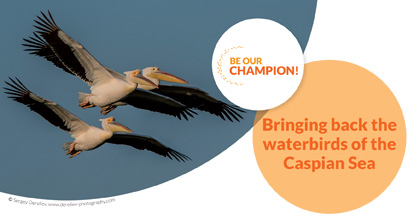 Bringing back the waterbirds of the Caspian Sea